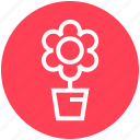 christmas, decoration, flower, plant, pot icon