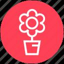 christmas, decoration, flower, plant, pot