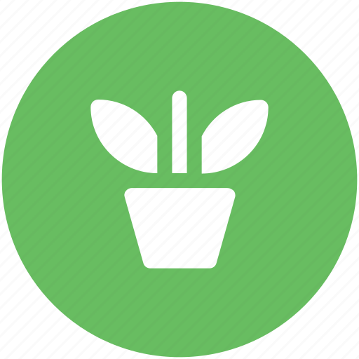 flowering plant, greenery, nature, plant, plant pot, pot, potted plant icon