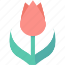 flower, garden, nature, rose, tulip icon