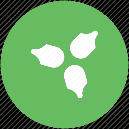 Christmas mistletoe, christmas ornaments, mistletoe, plant, xmas decorations icon - Download on Iconfinder