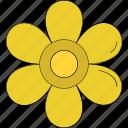 daisy, daisy flower, floral, flower, nature