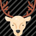 animal, christmas, deer, face, head, nature, reindeer