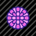 blooming, chrysanthemum, daisy, flower, flowering, outline, spring