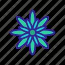 blooming, chrysanthemum, daisy, flower, flowering, outline, summer icon