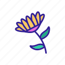 chrysanthemum, daisy, flower, flowering, fragrant, marguerite, outline icon