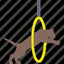 cirque, equilibristic, lion acrobat, lion circus, lion show icon