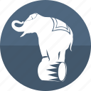 animal, circus, elephant, exercise, fair, show, zoo icon
