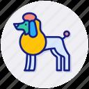 dog, show, like, love, pet, purebred