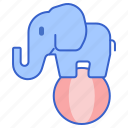 animal, ball, circus, elephant