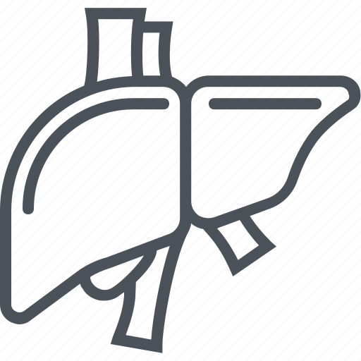 liver, organ icon