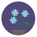 blue, bud, flower, plant