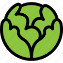 cabbage, food, fresh, healthy, salad, vegetable icon