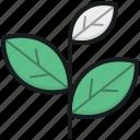 ecology, sapling, tree branch, tree leaves, twig icon