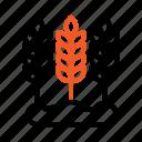 agriculture, ear, farming, wheat