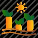 carrot, farming, growing, plant