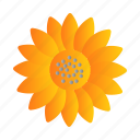 farming, flower, oil, sun flower