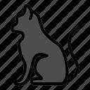 animal, cat, pet, pets