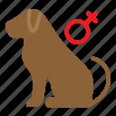 dog, female, gender, pet, shop