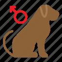 dog, gender, male, pet, shop