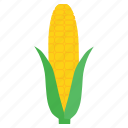 corn, food, fresh, healthy, staple, sweet, vegetable