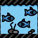 fish, farming, animal, animals, fishes