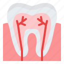 anatomy, teeth, nerve, dental icon