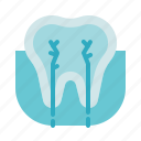 anatomy, dental care, dentist, health, nerve, stomatology, tooth icon