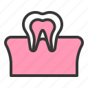 dental, dentistry, gum, hygiene, tooth, tooth and gum, teeth