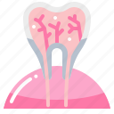 anatomy, dental, dentist, teeth, tooth icon