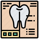 anatomy, coat, enamel, layers, tooth icon