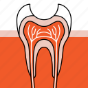 cavity, dentin decay, dentist, dentistry, orthodontics, tooth decay, treatment icon