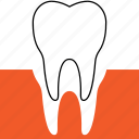 dentistry, extraction, oral surgery, orthodontics, teeth, tooth icon