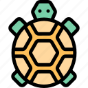 adventure, desert, land, outdoor, turtle icon