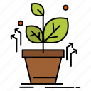 grow, grown, plant, success icon