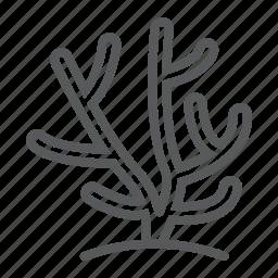 coral, life, nature, ocean, sea, tropical, underwater icon