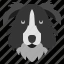 border, collie, pedigree, breed, canine, mammal