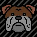 bulldog, dogs, dog, pets, mammals