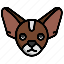 chihuahua, breed, dog, dogs, pet