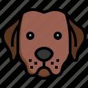 labrador, retriever, breed, dog, dogs, pet