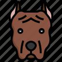 pitbull, animal, kingdom, mammal, animals, dog