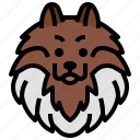 pomeranian, animals, dogs, dog, nose