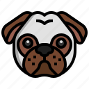 pug, animal, kingdom, mammal, pet, animals
