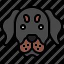 rottweiler, pet, pets, animals, dog