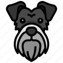 schnauzer, breed, dog, dogs, pet
