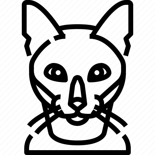 Animal, avatar, burmese, cat, kitty, pets icon - Download on Iconfinder