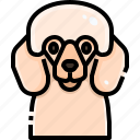 animal, animals, avatar, dog, pets, pudle, puppy