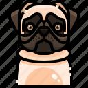 animal, animals, avatar, dog, pets, pug, puppy icon