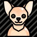 animal, animals, avatar, chihuahua, dog, pets, puppy icon
