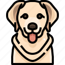 animal, avatar, dog, golden, pets, puppy, retriever